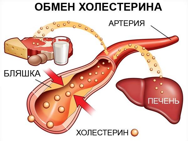 в печени диета холестерин